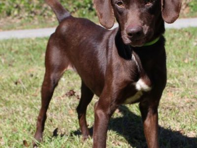 Autauga County Pet of the Week