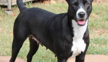 Elmore County Pet of the Week