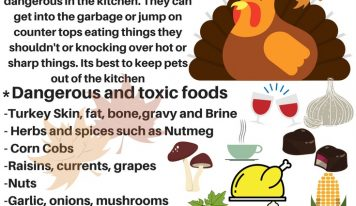 Thankgiving is One of the Busiest Days of the Year for Veterinarians; Here are some Tips for Pet Safety
