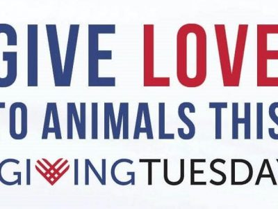 Humane Society of Elmore County Survives on Donations; Consider Them for Giving Tuesday Dec. 3