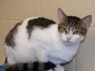 HSEC Pet off the Week: Meet Sassy! Loving, Playful and Quite the Cuddler, She is Waiting for New Home