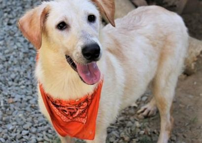 HSEC Pet of the Week: Meet Susie! Playful, Good Natured and Great with Other Dogs; Loves Water
