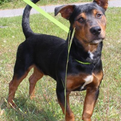 PAHS featured pet this week is Flash, such a sweet cutie!