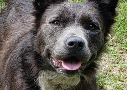 HSEC Pet of the Week: Meet Nala! A Happy, Free Spirit Kind of Girl, She Will Need a Good fence and Loves to Play Fetch