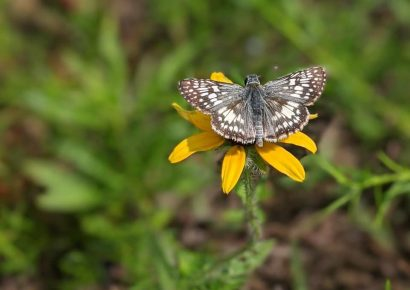The Pollinator Field is in Full Bloom at the Alabama Nature Center & NaturePlex in Millbrook! Come See True Natural Beauty