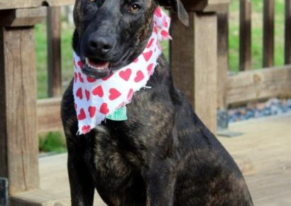 HSEC Pet of the Week: Meet Jersey! High-Energy Gal Could be a Superb Agility Dog, Loves Water and Children