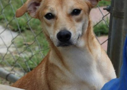 HSEC Pet of the Week: Meet Dakota! A Bit Shy at First, but Warms up Quickly