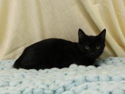 PAHS Pet of the Week: Meet Darlene! Hard Start in Life, Needs a New Chance