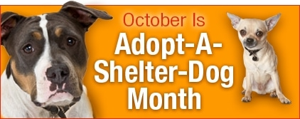 October is Adopt-A-Shelter Dog Month; A New Best Friend is Waiting for You…
