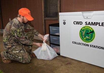 CWD Sampling Effort Continues as Archery Deer Season Opens; Sampling stations available throughout the state