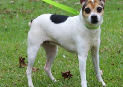 PAHS Pet of the Week: Meet KK! Family Was Moving and Couldn't Take her
