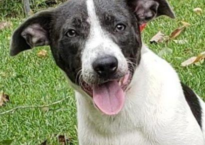 HSEC Pet of the Week: Meet Kim! Happy, Loving and Loves to Play