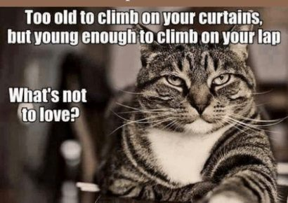 Old Pets Need Love, Too: November is Adopt a Senior Pet Month