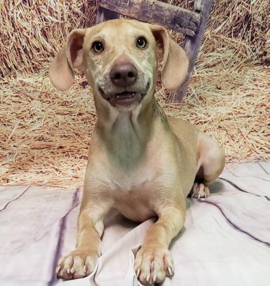 HSEC Pet of the Week: Meet Stitch! Dumped Like Trash, Pup Looking for a Lifetime Family