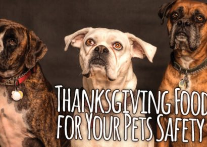 HSEC NEWS: Thanksgiving Safety Planning Should Include Your Pets