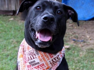 HSEC Pet of the Week: Meet Gypsy! Best in an Adult Only Home