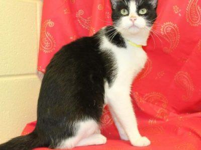 Autauga County Pet of the Week- Eleanor