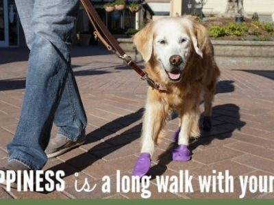 HSEC News: January is National Train Your Dog and Walk Your Pet Month