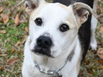 HSEC Pet of the Week: While Dorothy has Special Needs, She has A Lot of Love to Offer