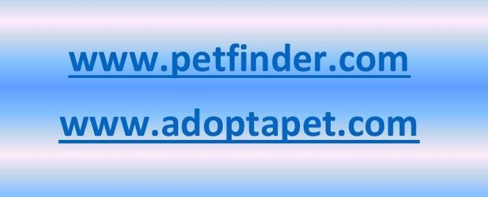 When Looking to Adopt an Animal There are options, Multiple Websites to Choose From