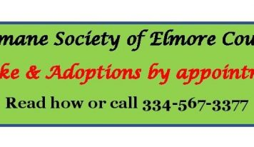 COVID Presented Learning Lessons Across the Country for Animal Shelters, including Elmore County