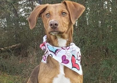 HSEC Pet of the Week: Meet Mandy! A Busy Girl with Energy to Burn