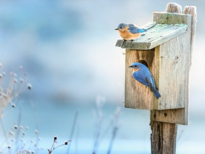 Alabama Cooperative Extension System Identifying Birds by Sight and Sound  FREE Workshop