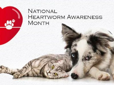 April is Heartworm Awareness Month; ALL dogs in Alabama should be on Heartworm Prevention