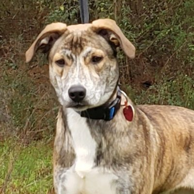 Meet Duke, Humane Society of Elmore County Pet of the Week