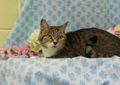 PAHS Pet of the Week: Meet Windy! Super Sweet Older Cat that Loves to Love